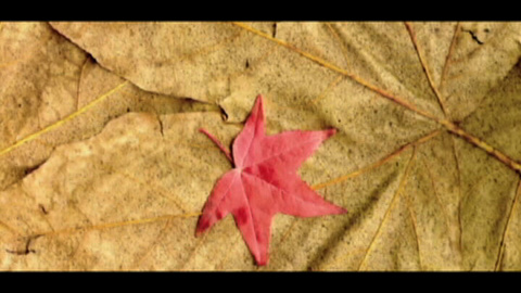 Photo for Leaf